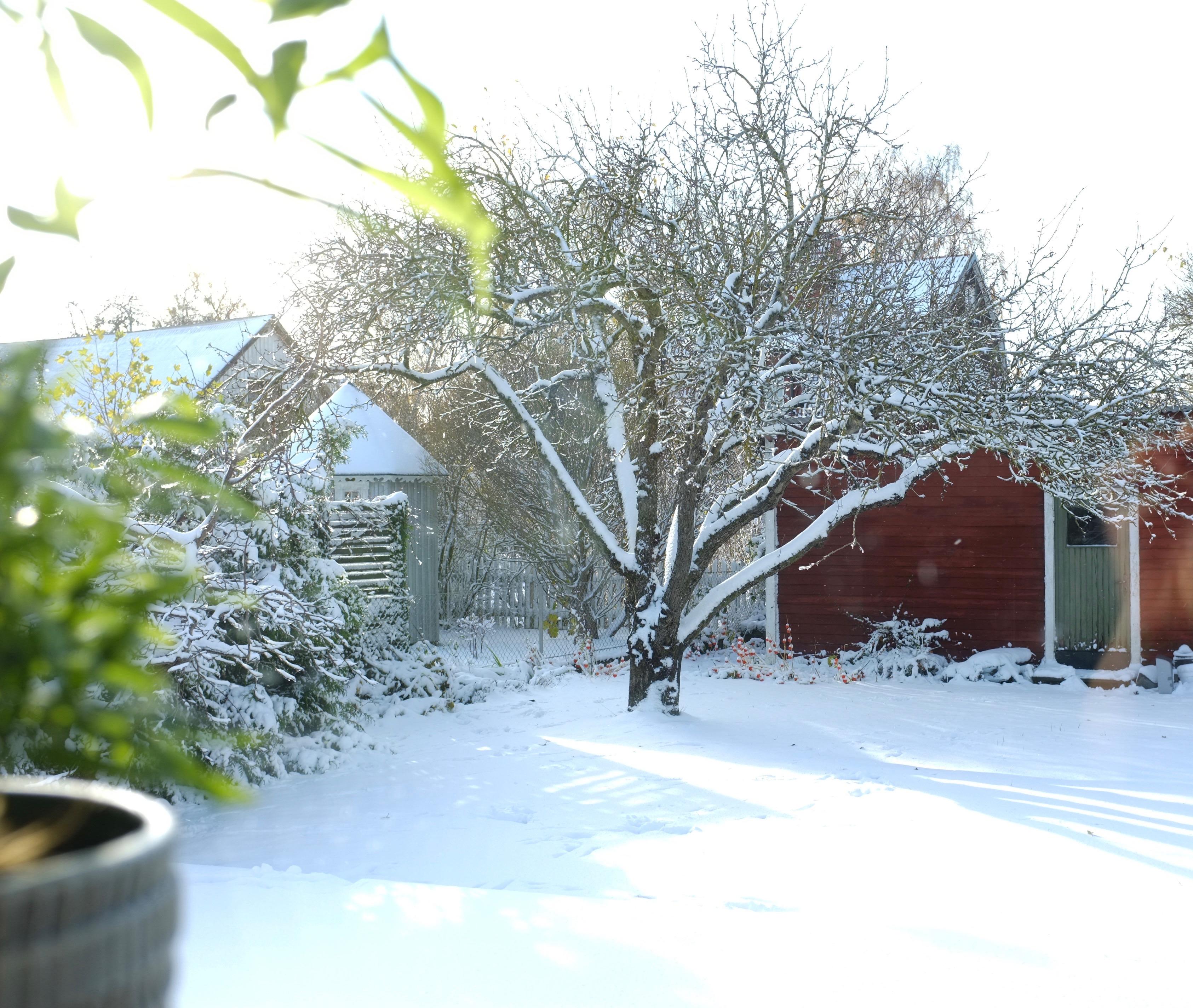Vintern från köksfönstret