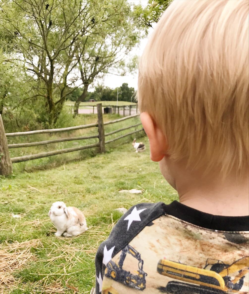 Skälby 4H-gård - kaniner