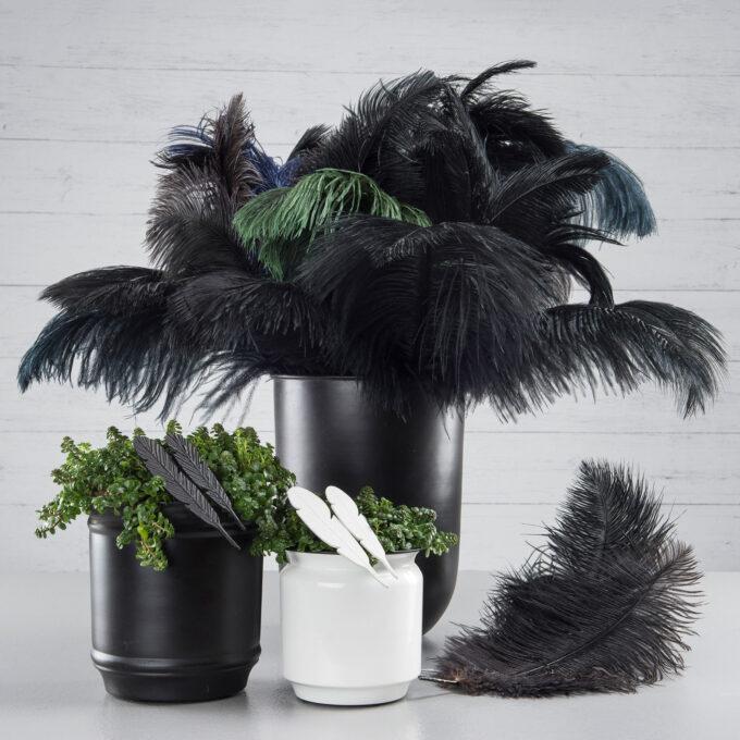 strutsfjäder svart