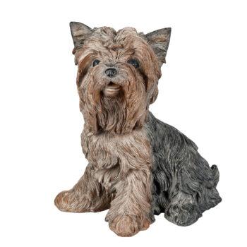 Hund yorkshire
